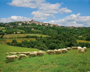 Pecore&Manciano