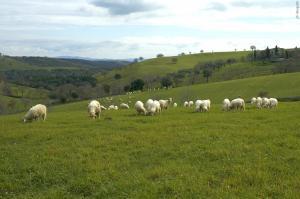 Pecore&panorama3